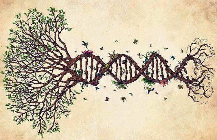 A árvore da vida como um mapa para o caminho